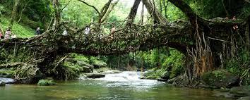 meghalaya living bridges tour living root bridges of meghalaya