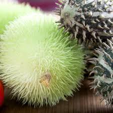 ornamental cucumber mixed seeds cucumis dipsaceus garden seeds