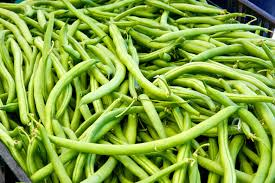 miss gardening grow green beans indoors this winter off the