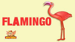 animal facts flamingo youtube