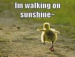 Good Morning Sunshine Meme - funny good morning sunshine good best of the funny meme