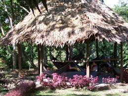 personal story treating depression and anxiety with ayahuasca and
