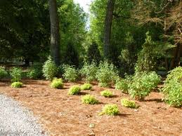 Backyard Trees Landscaping Ideas by How To Landscape A Shady Yard Diy