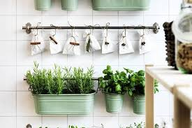 Plants To Keep In Bathroom The Dos U0026 Don U0027ts Of Growing Mint Apartment Therapy
