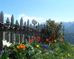 experience the spring in south tyrol herbal excursions and