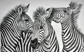 animals desktop images mobile wallpapers three wall murals animals desktop images mobile wallpapers three wall murals zebra hd 4k zebras wild life 1920x1200 wallpaper hd