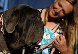 Ugliest Gassy Mastiff Martha Named World U0027s Ugliest Dog Good Day Sacramento