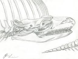 snake skeleton sketch by sirosis on deviantart
