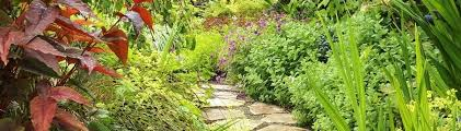 Urban Home Victoria Gardens - urban habitats landscape studio victoria bc ca v8x 1l3