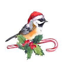 mistletoe hat christmas bird in hat on candy with mistletoe watercolor