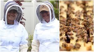 backyard beekeeping youtube