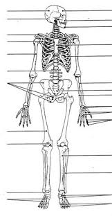 collection of human skeletal system worksheets bloggakuten