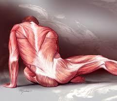 the human body 14 studyjams interactive science activities