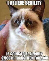 Hairless Cat Meme - hairless cat meme generator mne vse pohuj