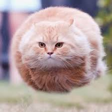 Flying Cat Meme - flying cat to live is the rarest thing in the world most people