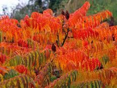 flowers plants fall color hgtv