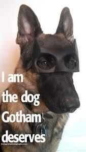 Funny German Shepherd Memes - evil k羝pek foto茵raf莖 chepkadog tr pinterest german shep