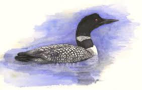 and the peanut a common loon