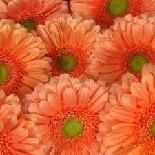 wholesale flowers online 46 best fresh wholesale flowers images on coolers
