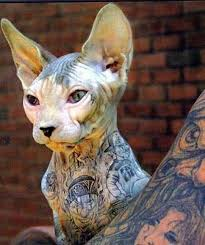 pet tattoos and piercings trend or animal cruelty tattoo com