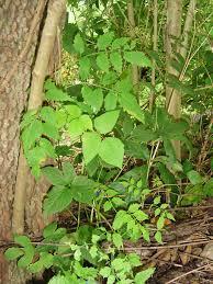 vine covered trees forest garden