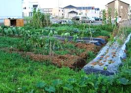 Kitchen Garden Designs Home Vegetable Garden Design Design Ideas