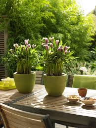 garden design garden design with plants for pots ideas pots plus