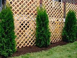 Backyard Landscaping Ideas For Privacy by Landscaping Ideas For Privacy Backyards Spend More Times In The
