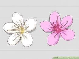Identify Flowers - 3 ways to identify cherry trees wikihow