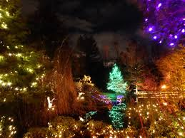 net christmas lights for small bushes christmas ms poiesis