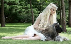afghan hound blonde wallpapers sighthound afghan hound dogs blonde girls 3840x2400