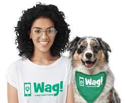 australian shepherd las vegas las vegas u0027s best dog walkers wag