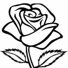 imagenes para colorear rosas dibujos de rosas facil rapido y bonitas para dibujar
