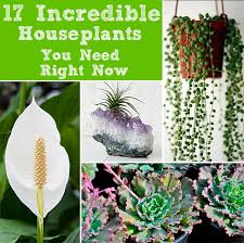 Easy Care Indoor Plants 10 Easy To Care House Plants