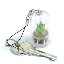 plantochi mini plant pet plant pet tree buy mini plant product on