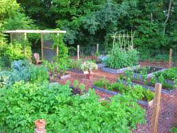 popular raised garden bed ideas vegetables with raised bed garden