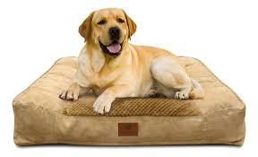 Memory Foam Dog Bed Amazon Com American Kennel Club Memory Foam Sofa Pet Bed X