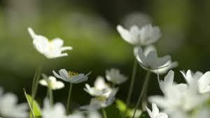 spring flowers blooming marvelous youtube