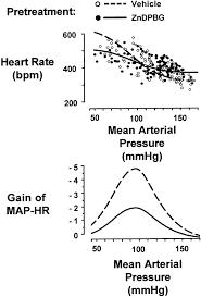 Map Mean Arterial Pressure Role Of Endogenous Carbon Monoxide In Central Regulation Of