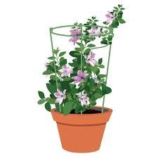 amazon com mini trellis 7 inch dia garden trellis plant