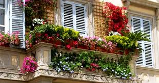 Balcony Garden by Top Ideas To Decorate Your Balcony Garden With Creepers U0026 Climbers