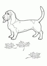 dog color pages printable australian shepherd coloring page