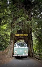 Chandelier Drive Through Tree Vw Bus U0026 Drive Through Tree Nature Photos Creative Market