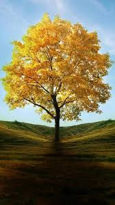 best 25 yellow tree ideas on what is perspective