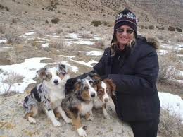 australian shepherd working mini aussies in colorado a companion and working dog in a small
