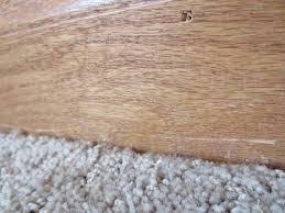 Laminate Flooring And Installation Prices Floor Attractive Home Depot Flooring Installation For Home