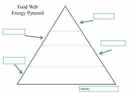 139 best ecology energy flow food webs images on pinterest