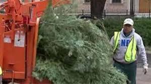 christmas tree recycling houston christmas lights decoration