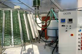 how microalgae bind carbon dioxide and how they are used as