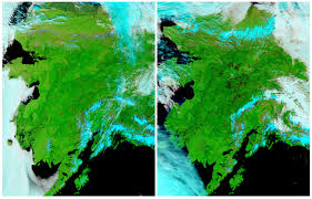 Alaska Wildfires Map by Alaskan Wildfires Have Destroyed An Area Over 25 Times Larger Than